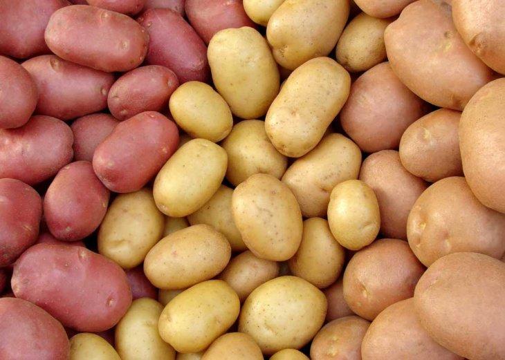 семена картофеля в астрахани